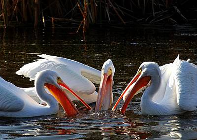 Photograph - Three Pelicans And A Fish by Elizabeth Winter