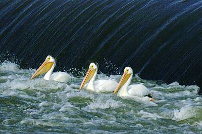 Three Pelicans Hanging Out  Art Print by Jeff Swan