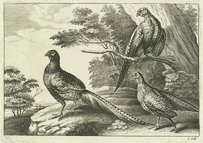Pheasant Drawing - Three Pheasants, Pieter Van Lisebetten, Wenceslaus Hollar by Pieter Van Lisebetten And Wenceslaus Hollar And Francis Barlow