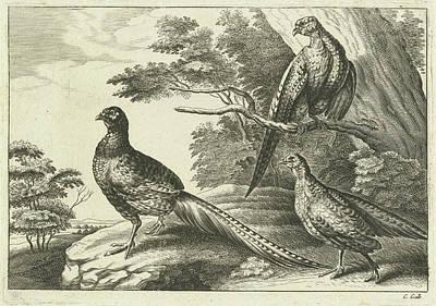 Pheasant Drawing - Three Pheasants, Pieter Van Lisebetten, Wenceslaus Hollar by Pieter Van Lisebetten And Wenceslaus Hollar And Francis Barlow