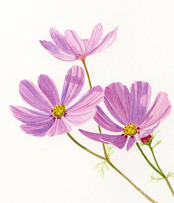 Cosmos Flowers Painting - Three Pink Cosmos Blossoms by Sharon Freeman