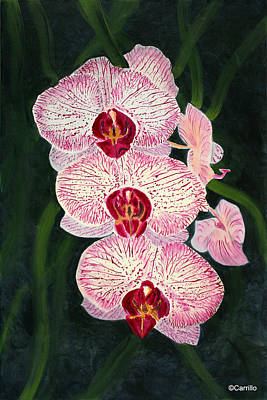 Ruben Carrillo Wall Art - Painting - Three Pink Orchids by Ruben Carrillo