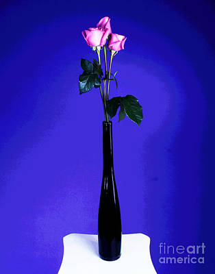 Photograph - Three Pink Roses Dressed In Black by Larry Oskin