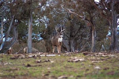 Three Point Mule Deer Buck Original by John Wright