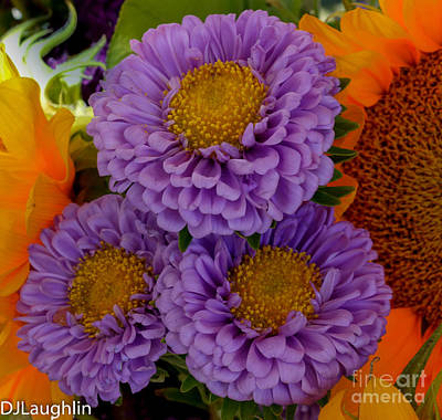 Photograph - Three Purple Flowers Dahlia by DJ Laughlin