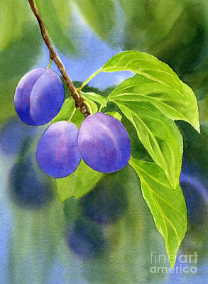 Three Purple Plums With Background Print by Sharon Freeman