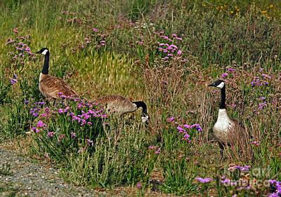 Photograph - Three Quiet Canada Geese by Susan Wiedmann