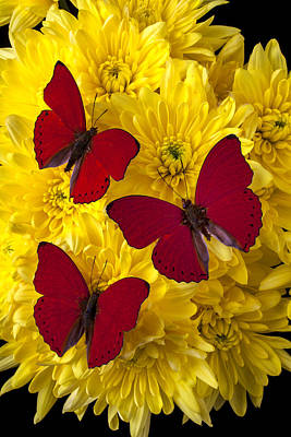 Three Red Butterflys Art Print by Garry Gay