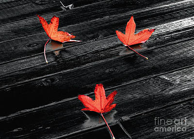 Photograph - Three Red Leaves After Rain by Ellen Cotton