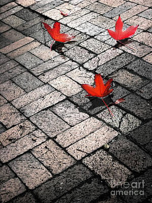 Photograph - Three Red Leaves by Ellen Cotton