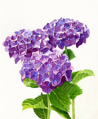 Blooming Painting - Three Red Violet Hydrangea Blossoms by Sharon Freeman