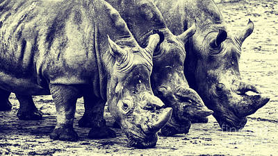 Photograph - Three Rhinos In A Row by Nick  Biemans