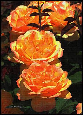 Four Rose At Mcc Art Print