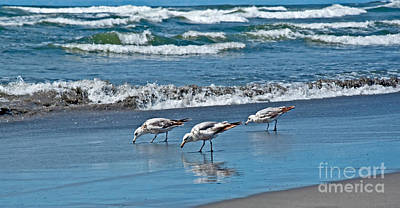 Photograph - Three Seagulls At Ocean Shore Art Prints by Valerie Garner