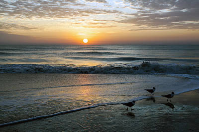 Photograph - Three Seagulls Greet The Dawn by Lynn Palmer