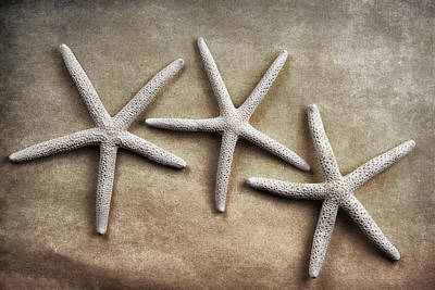 Three Fish Photograph - Three Starfish by Carol Leigh