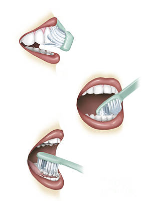 Routine Digital Art - Three Steps Of Proper Tooth Brushing by TriFocal Communications