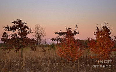 Indiana Photograph - Three Tree Sunset  by Amy Lucid