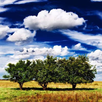 Photograph - Three Trees by Eric Benjamin