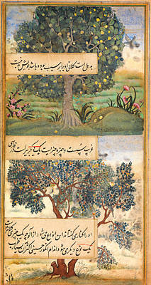 Marrakech Painting - Three Trees Of India by Celestial Images