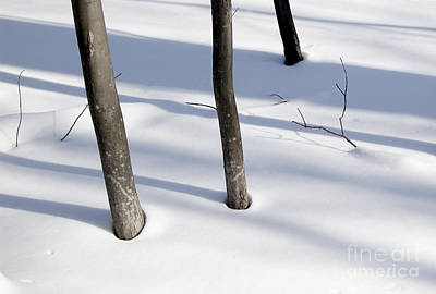 Photograph - Three Trees Snow by Tom Brickhouse
