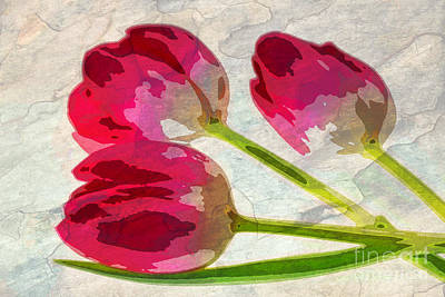 Photograph - Three Tulips by Charline Xia