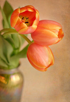 Photograph - Three Tulips by David and Carol Kelly