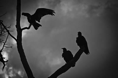 Three Vultures Art Print by Bradley R Youngberg