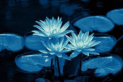 Three Water Lilies In Cyan Art Print by Linda Phelps