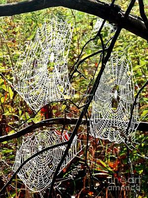 Photograph - Three Webs On A Branch by Christian Mattison