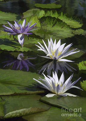 Photograph - Three White And Purple Lilies by Sharon Foster