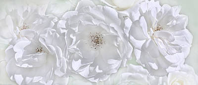 Photograph - Three White Roses by Jennie Marie Schell