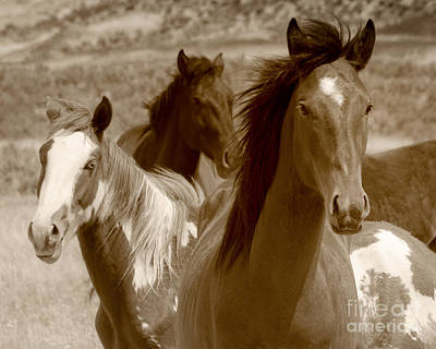Photograph - Three Wild Horses Grazing On Navajo Indian Reservation  by Jerry Cowart