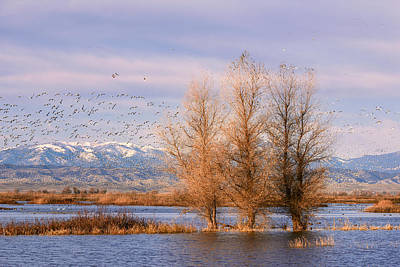 Photograph - Three Willow Trees by Kathleen Bishop