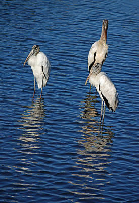 Three Wood Storks - Just Hanging Out Original