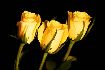 Photograph - Three Yellow Roses by Brian Davis