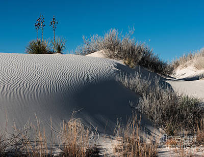 Photograph - Three Yuccas On The Dune by Sherry Davis