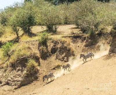 African Wildlife Digital Art - Three Zebras Kicking Up Dust by Liz Leyden