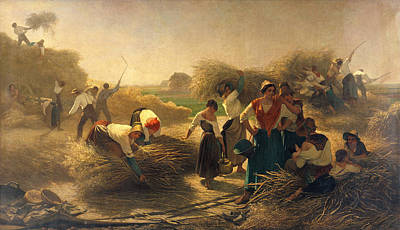 Threshing Rapeseed In The Fields Of Lille Oil On Canvas Print by Auguste Joseph Herlin