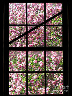 Cherry Tree Photograph - Through An Old Window by Olivier Le Queinec