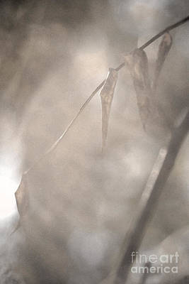 Photograph - Through Smoke And Mist by Linda Shafer