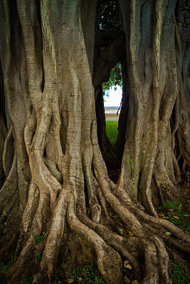 Photograph - Through The Banyan Tree by Roger Mullenhour