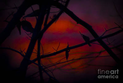 Photograph - Through The Branch Of Color by Debra K Roberts