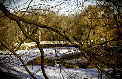 Through The Branches 2 - Central Park - Nyc Art Print by Madeline Ellis