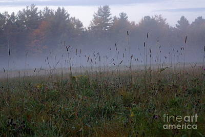 Photograph - Through The Field Grass by Kerri Mortenson
