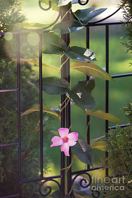 Photograph - Through The Gate by Kay Pickens