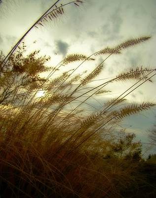 Through The Grass Art Print by Gothicrow Images