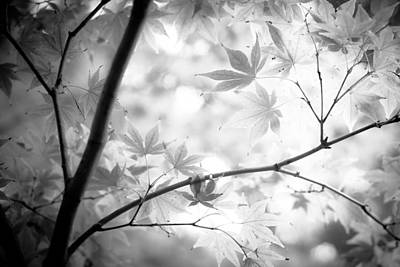 Photograph - Through The Leaves by Darryl Dalton