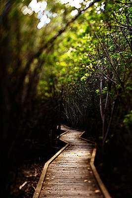 Photograph - Through The Mangroves by Heather Green