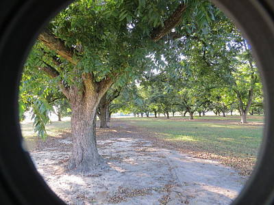 Photograph - Through The Orchard by Aaron Martens